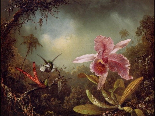 Martin Johnson Heade, Orchid with Two Hummingbirds (1871), oil